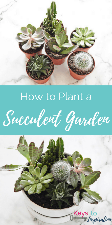How To Plant A Modern Succulent Garden. Easy DIY Project That Makes A Great  Home