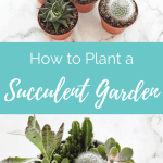 How to Plant a Succulent Garden