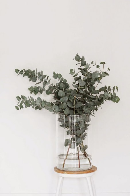 So many creative ideas for using Eucalyptus - my favorite green!