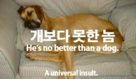 137-dog-better