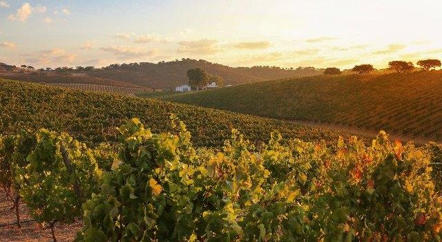 alentejo-vineyard