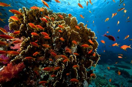 ras-mohamed-red-sea-cruise-and-snorkeling-in-sharm-el-sheikh-141688