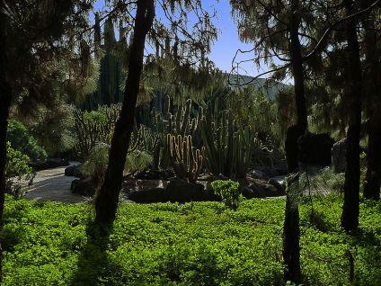 800px-Cacti_and_euphorbias_through_pines