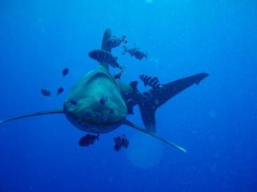 elphinstone-reef
