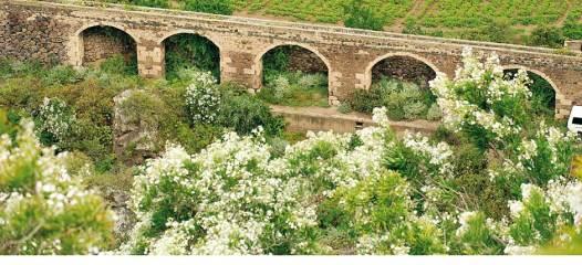 jardin_botanico_viera_y_clavijo-gran_canaria_2