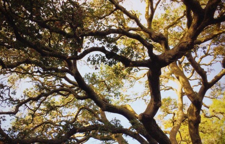 Image result for free photo of Luke 19: 1-10