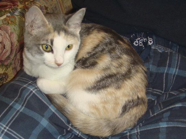 Jasmine kitten- October, 2010