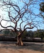 dharkudhi- karvi