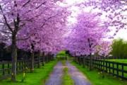 17-04-14 Mano - Spring 1