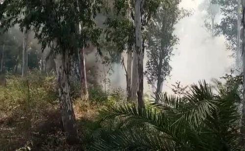 नालागढ़ के जगतखाना में जंगल में लगी भयंकर आग