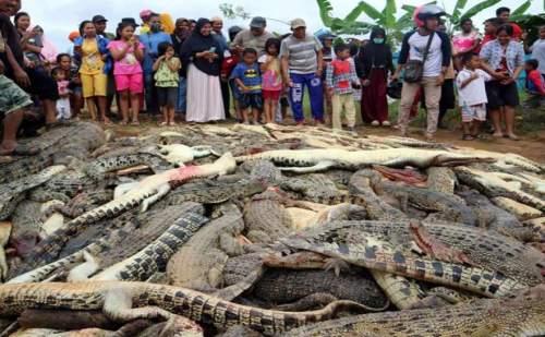 युवक की मौत से भड़की भीड़ ने मार डाले 300 से ज्यादा मगरमच्छ