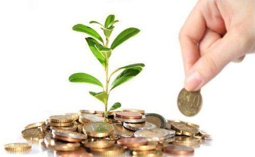 मनी प्लांट किस दिशा में लगाना चाहिए जिससे धन प्राप्ति शीघ्रता से होगी..