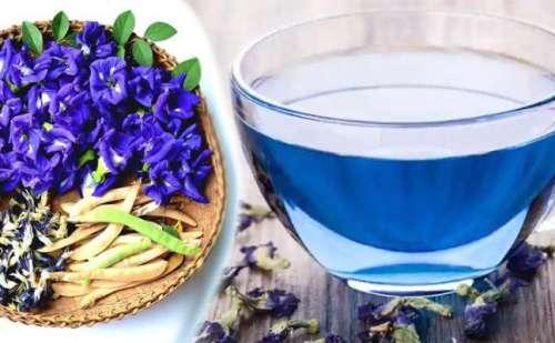 क्या आपने कभी पी है अपराजिता के इन नीले फूलों की बनी चाय