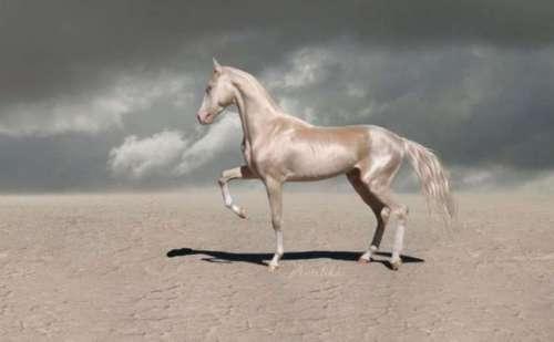 ये है दुनिया का सबसे सुंदर घोड़ा, जिससे देखकर आपकी आंखें रह जाएगी भौचक्की