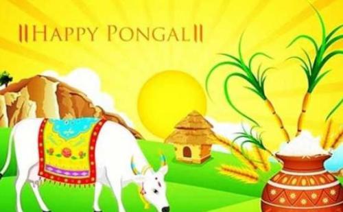 तमिलनाडु में पोंगल की हुई शुरुआत, 18 जनवरी तक मनाया जाएगा ये त्योहार