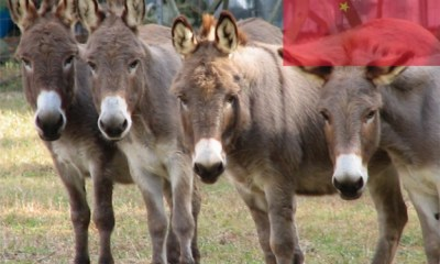 South Africa's Donkeys