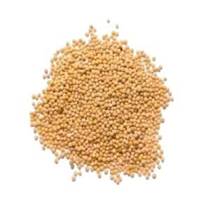 white mustard seed - sarisa dana