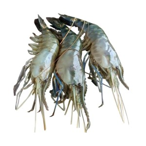 shrimp golda (chingri)