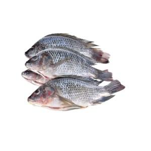 tilapia fish 1kg