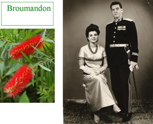 Broumandon1