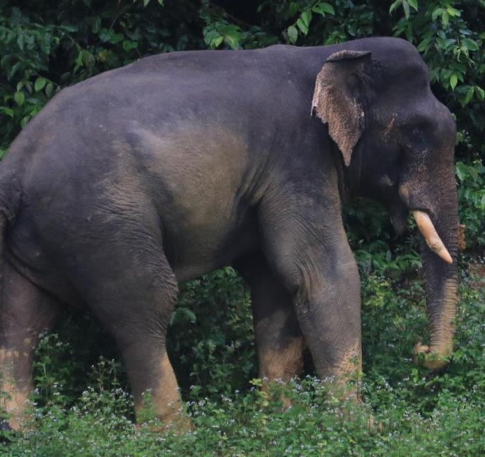 khao-lak-ausflüge-khao-sok-wildtier-expedition