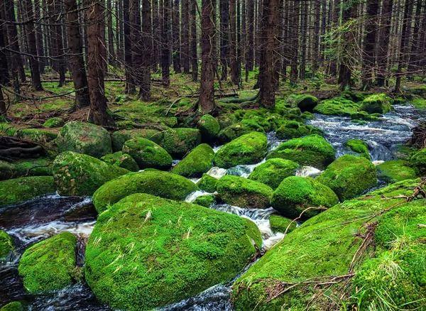 الغابة السوداء، ألمانيا