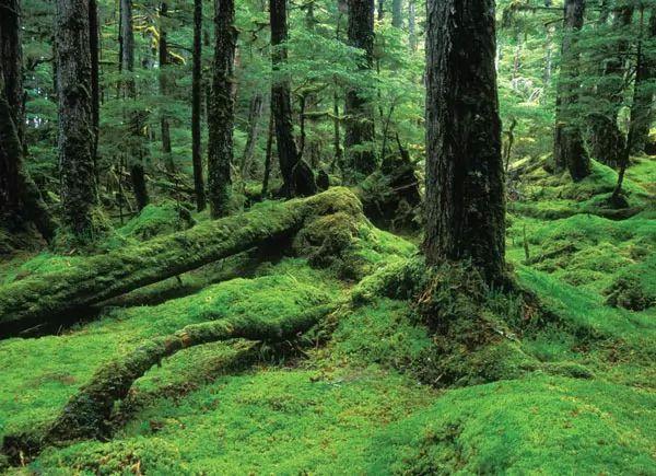 غابة يونغاس الوطنية، الولايات المتحدة
