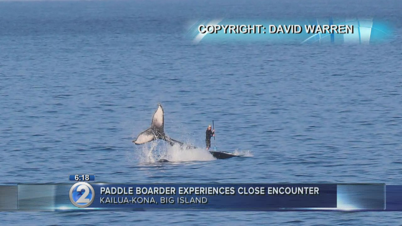 Paddleboarder experiences close encounter with whale off Kona