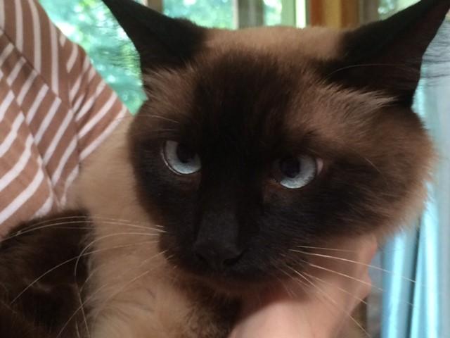 bogie cat_107095