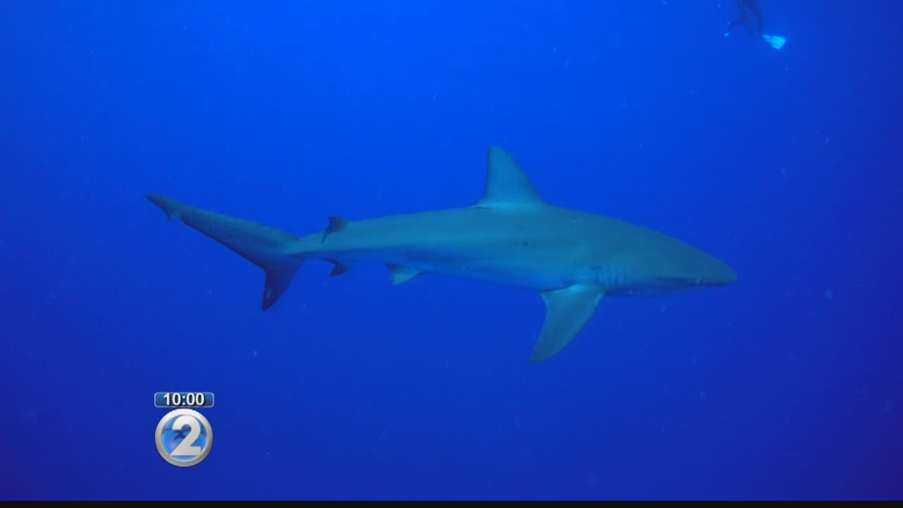 Woman reportedly bitten by shark while snorkeling off Maui