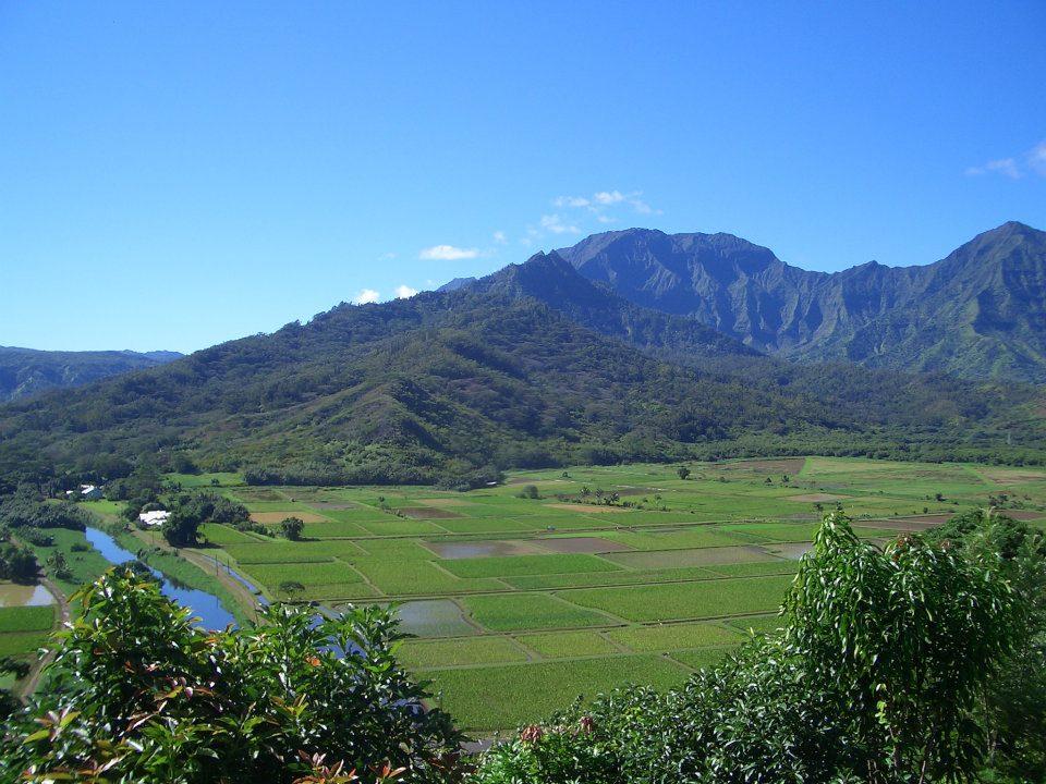 Haraguchi taro farm in Hanalei Kauai