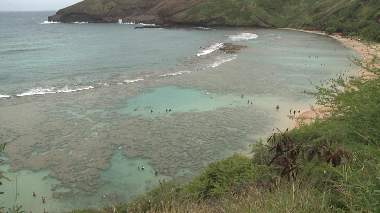 Hanauma Bay damaged by chemicals in sunscreen