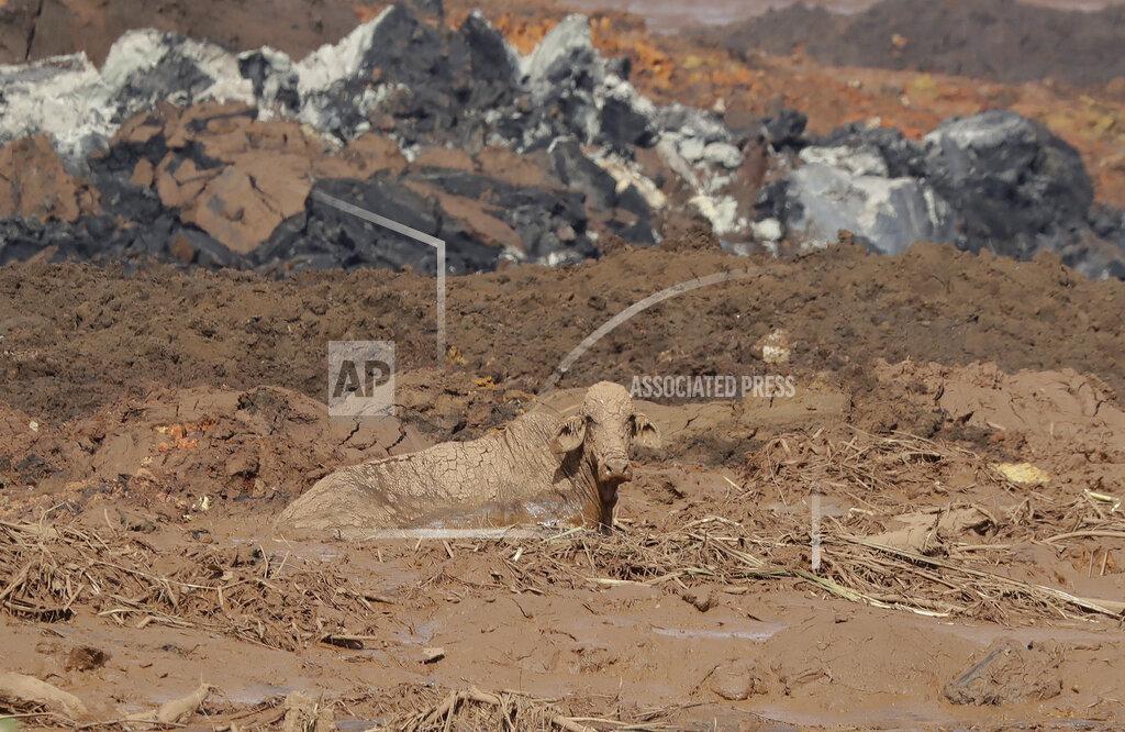 APTOPIX Brazil Dam Collapse_1548614208007