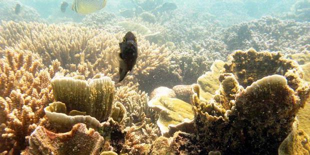Three key problems encountered in preservation of coral reefs: Kiara