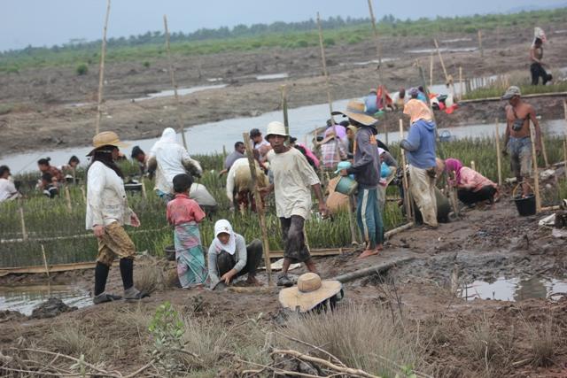 Hari Bumi, Nelayan dan Perempuan Nelayan Rehabilitasi Lahan Mangrove
