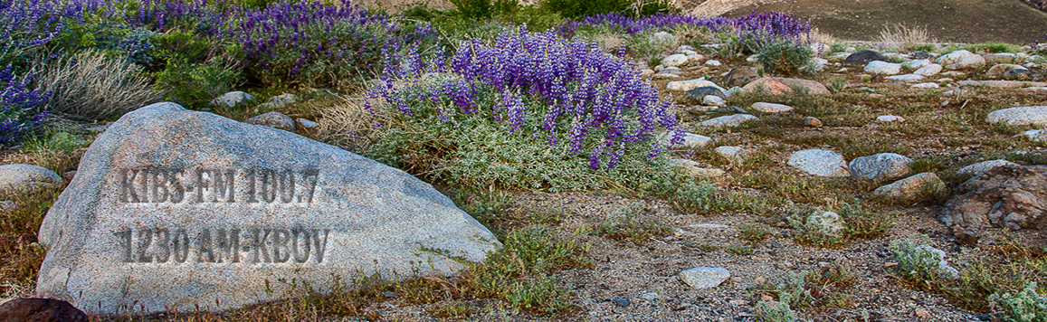 LUPINE-HOME-BANNER