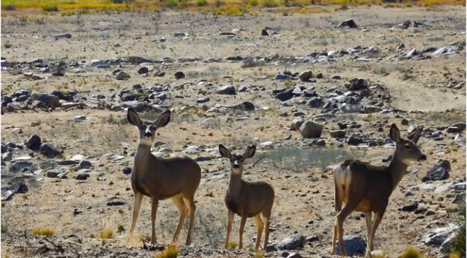 Mono County Seek to Mitigate Wildlife Deaths With Grant Money