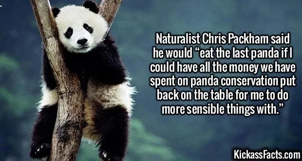 "2634 Panda Conservation-Naturalist Chris Packham said he would ""eat the last panda if I could have all the money we have spent on panda conservation put back on the table for me to do more sensible things with."""