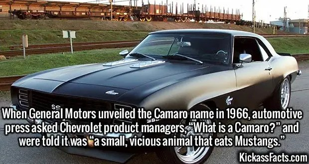 "2643 Camaro-When General Motors unveiled the Camaro name in 1966, automotive press asked Chevrolet product managers, ""What is a Camaro?"" and were told it was ""a small, vicious animal that eats Mustangs."""