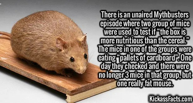 "3107 Cannibal Mouse-There is an unaired Mythbusters episode where two group of mice were used to test if ""the box is more nutritious than the cereal."" The mice in one of the groups were eating ""pallets of cardboard"". One day they checked and there were no longer 3 mice in that group, but one really fat mouse."