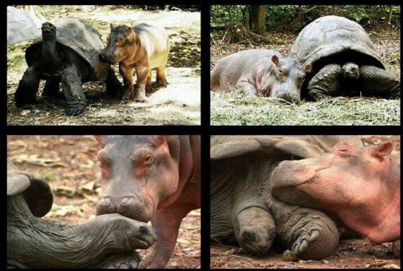 Asian tsunami rhino and tortoise