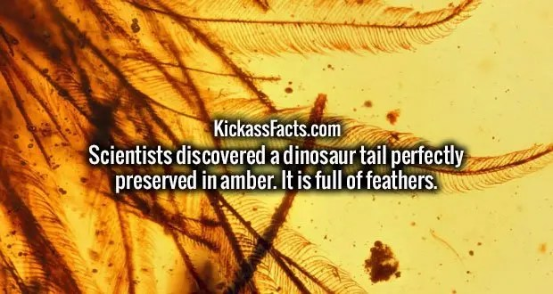 Scientists discovered a dinosaur tail perfectly preserved in amber. It is full of feathers.