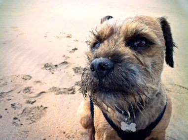 a cheeky dog with sand on his mouth on beach