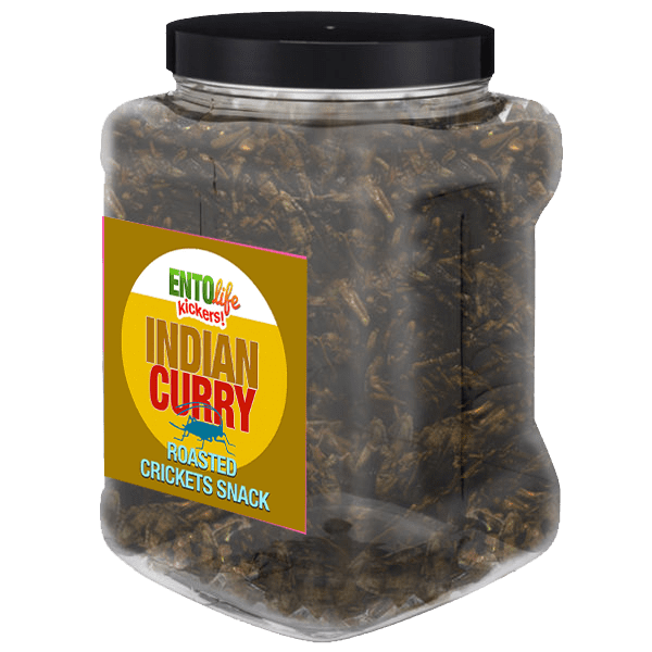 Pound Edible Crickets Indian Curry Flavor