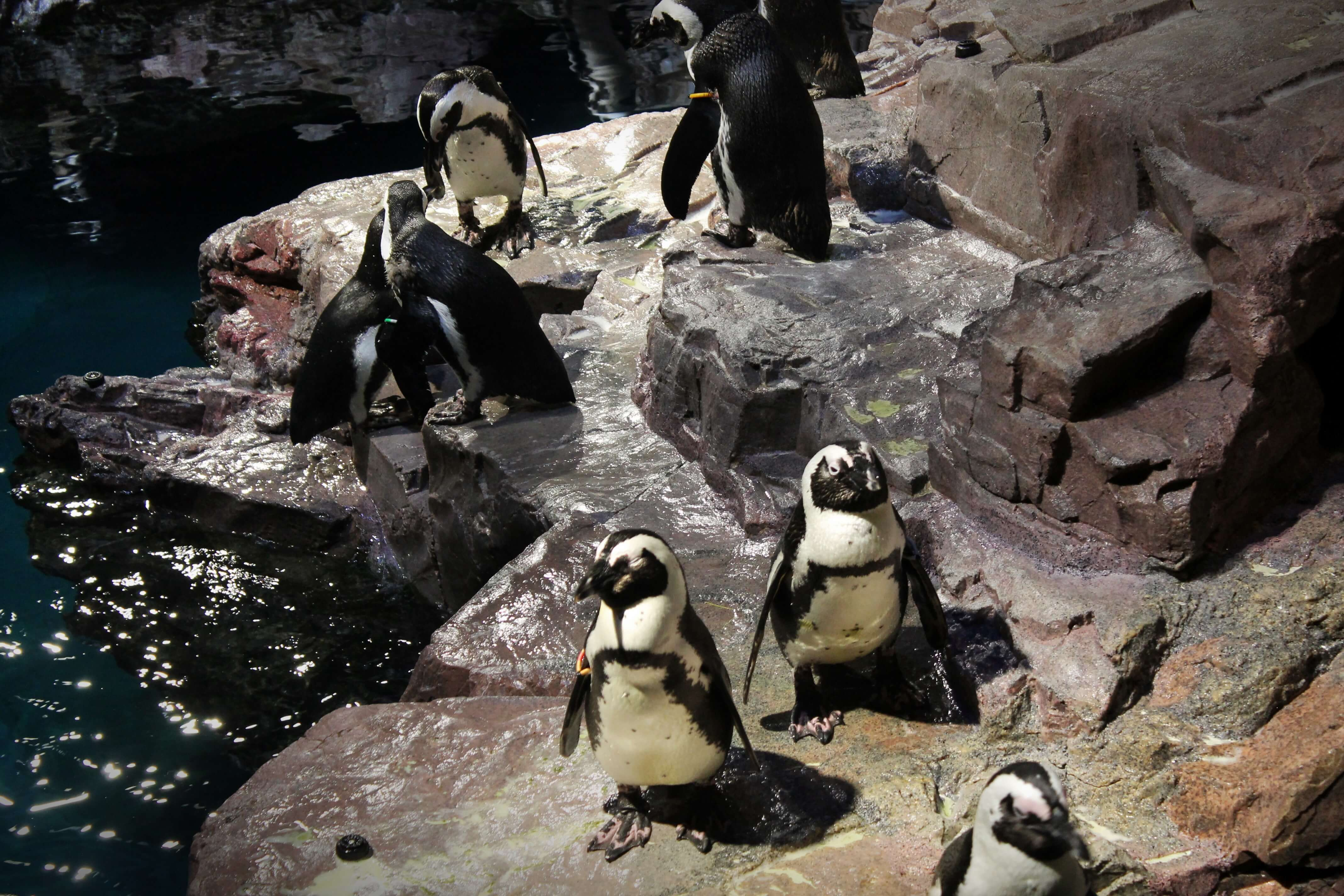 The New England Aquarium | Kicking Back the Pebbles
