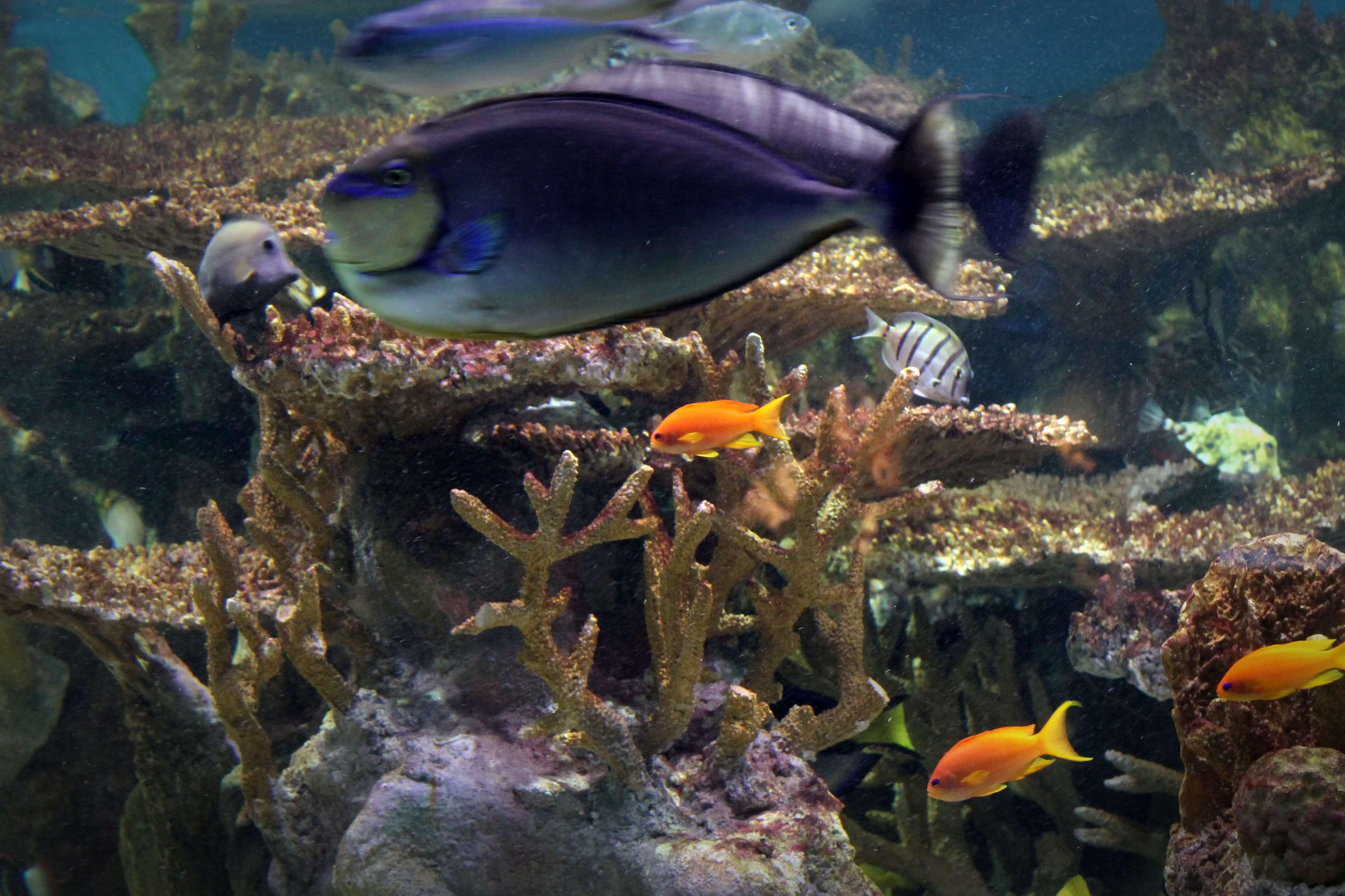 The New England Aquarium   Kicking Back the Pebbles