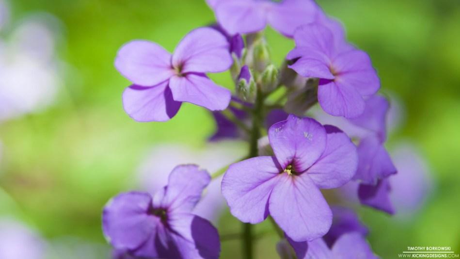 wild-flowers-5-18-2014
