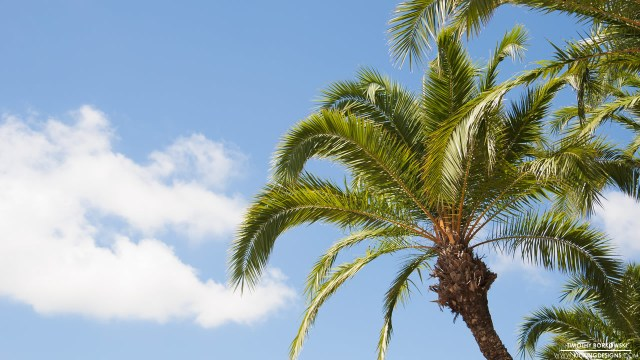 palm-trees-4-8-2015