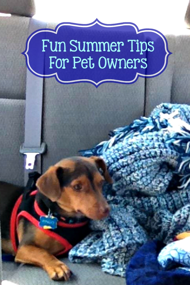 4 fun summer tips for pet owners