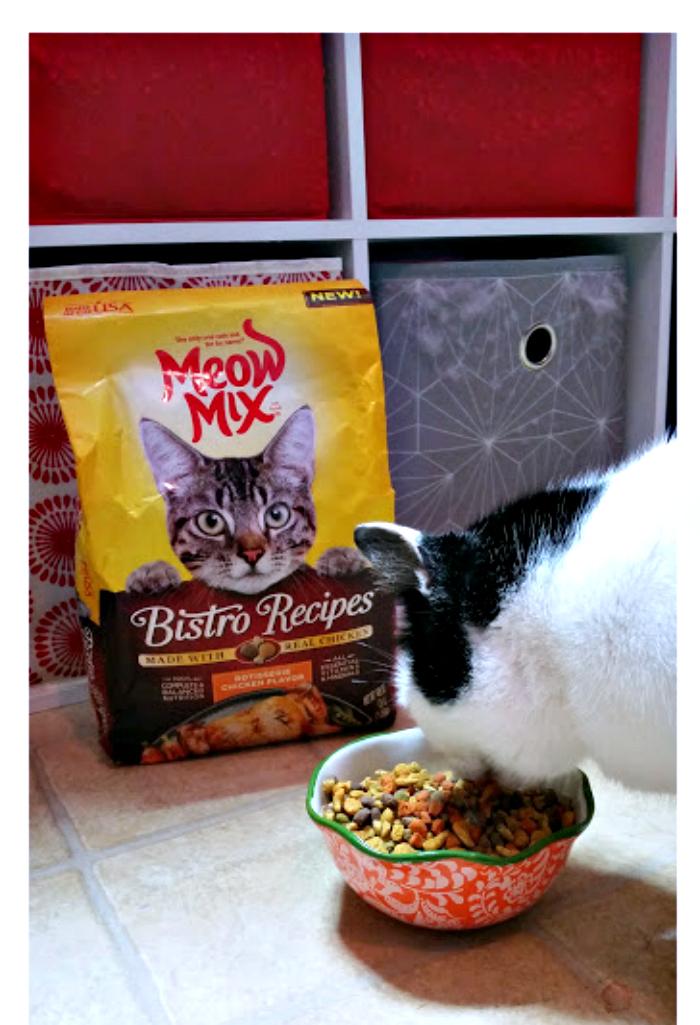 3 Ways To Celebrate Happy Healthy Cat Month Meep